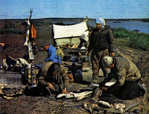 Фото №1 - Бронзовый век Таймыра