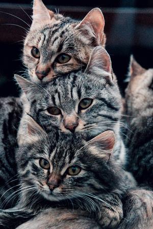 Фото №2 - К чему снятся котята: что говорят сонники и психологи