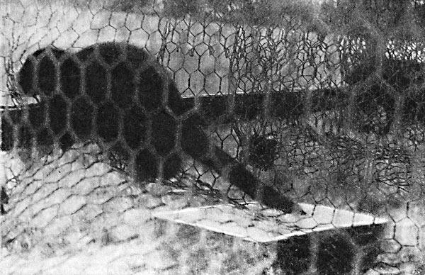 Фото №1 - Гостья из Седанки, Кедровский эксперимент