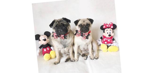 Фото №20 - 20 очаровательных собак в костюмчиках по мотивам мультфильмов Disney