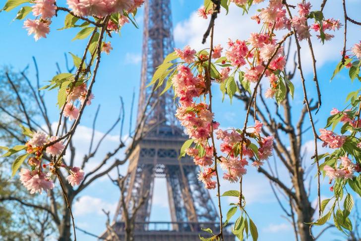 Фото №1 - Весна в Париже