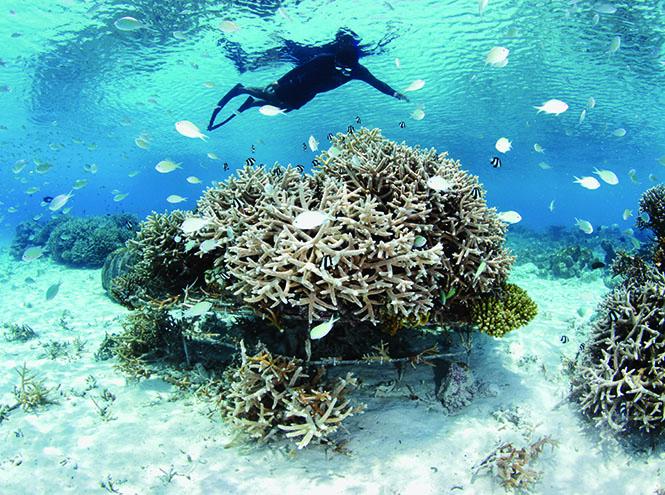 Фото №3 - Мальдивы: роскошный отдых по законам аюрведы