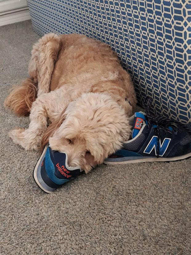Фото №11 - 13 фото собак, притворяющихся утконосами