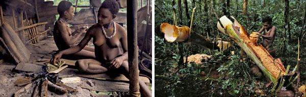 Фото №4 - Обитатели папуасских пентхаусов