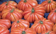 Полезные свойства томата Пузата хата
