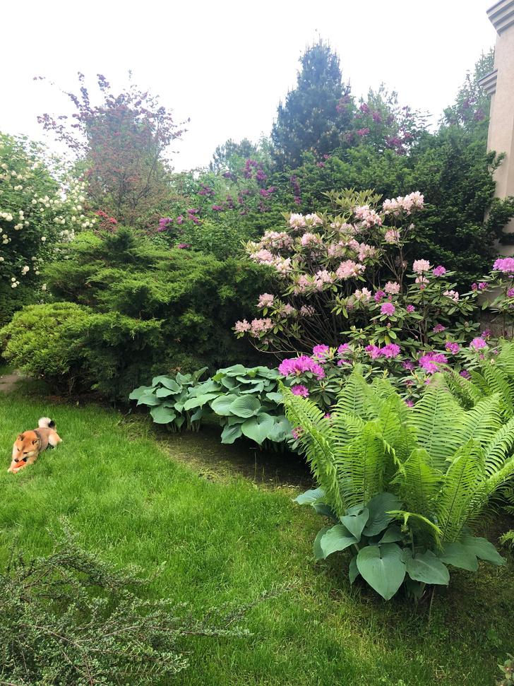 Фото №21 - ELLE DECORATION в саду у дизайнера Ирины Глик