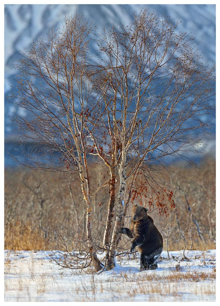 Фото №8 - Лесные истории