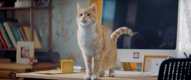Фото №2 - Мясо в качестве зарплаты, дублеры и тишина на площадке: как работают коты-актеры