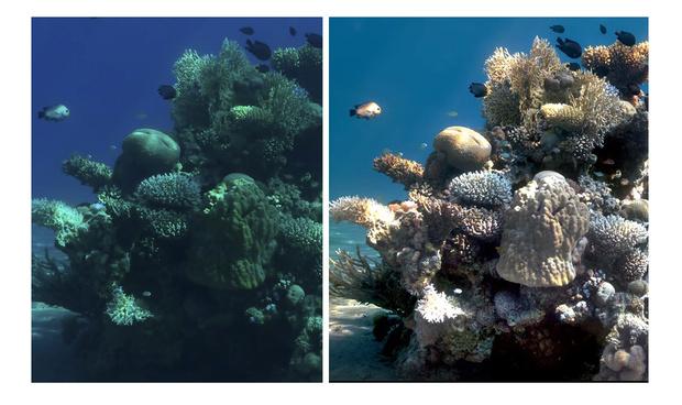 Фото №1 - Как выглядят подводные фото, если убрать из них воду