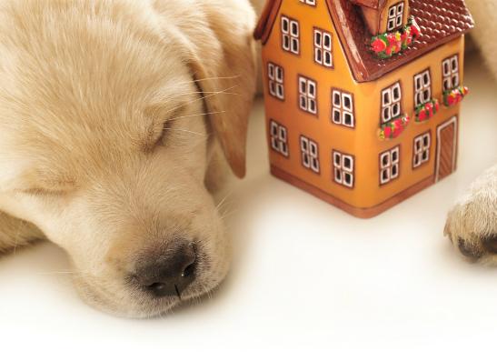 Фото №5 - Отели для животных: где отдохнуть с четвероногим?