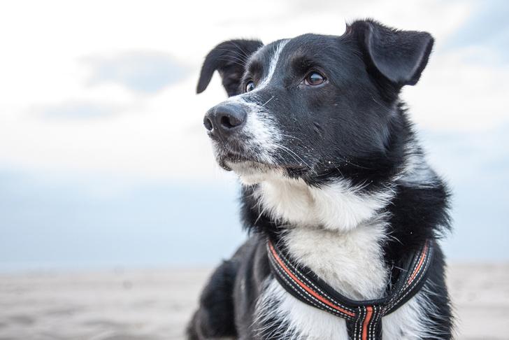 Фото №1 - Умные собаки помогут ученым в исследовании человеческих болезней
