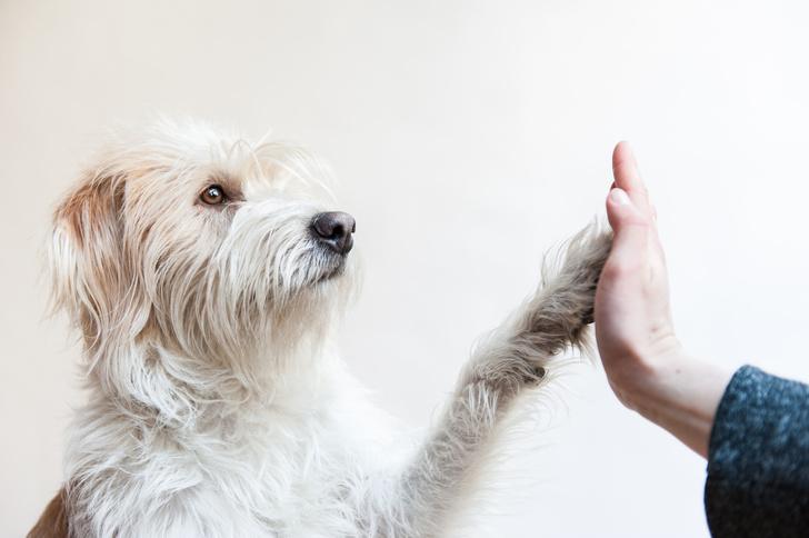Фото №1 - Ученые выяснили, как собаки стали лучшими друзьями человека