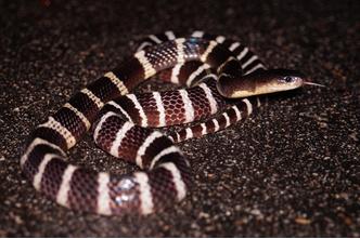 Фото №7 - Работа убивает: 5 герпетологов, которые не пережили укус змеи