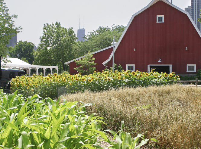 Фото №7 - Сад мечты: 6 оригинальных идей для дачного участка