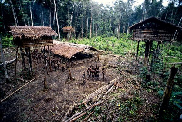 Фото №5 - Обитатели папуасских пентхаусов