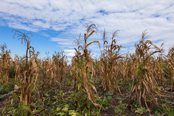 Фото №1 - Хватит ли еды растущему населению Земли