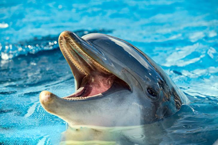 Фото №1 - Ученые обнаружили, что дельфины разговаривают, как люди