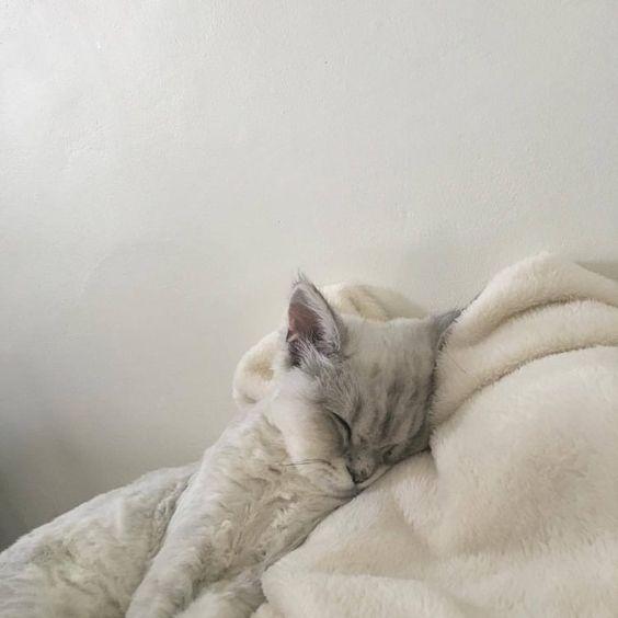Фото №4 - Как наладить режим сна, если вы чертовски устали