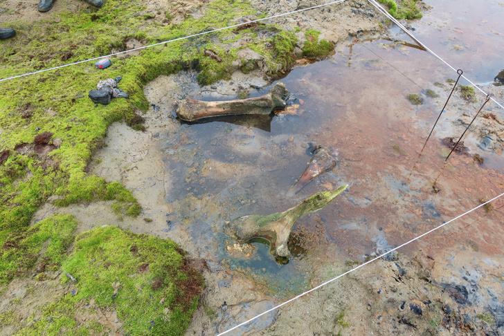 Фото №1 - На Ямале обнаружили останки мамонта