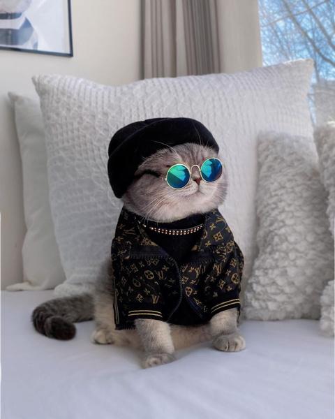 Фото №19 - Инста дня: Этот кот про моду знает больше, чем ты 😂