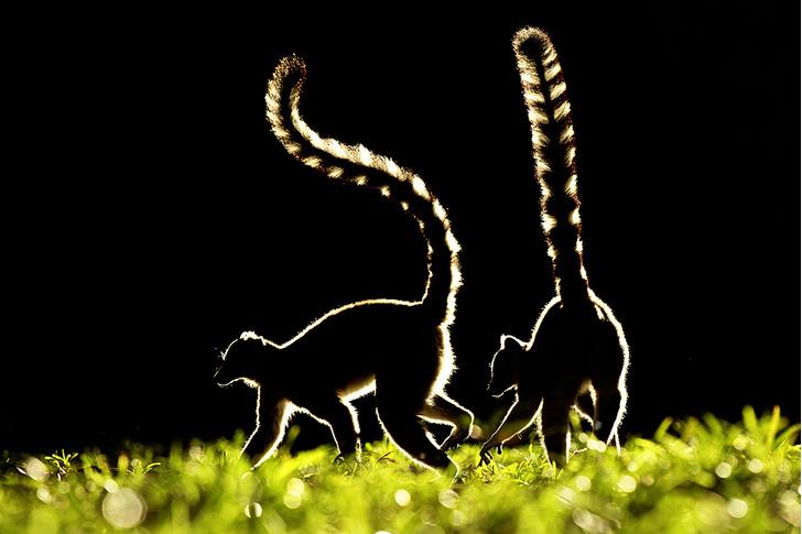Фото №3 - Зоология: гламурная семейка