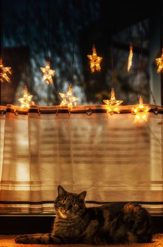 Фото №4 - Советы дизайнеров: как создать уют к Новому году