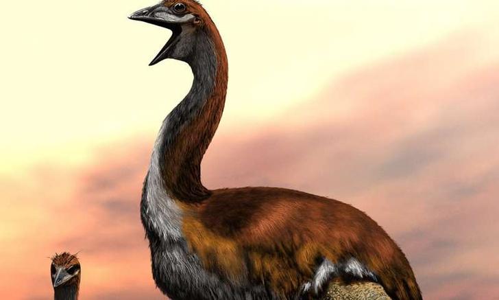 Фото №1 - Ученые назвали крупнейшую птицу в истории