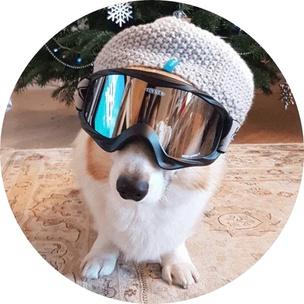 Фото №8 - Гадаем на гифках: какое смешное животное больше всего напоминает тебя сегодня