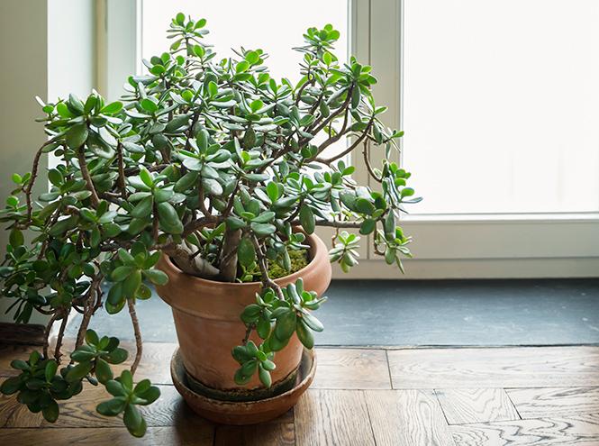 Фото №2 - 6 самых неприхотливых комнатных растений