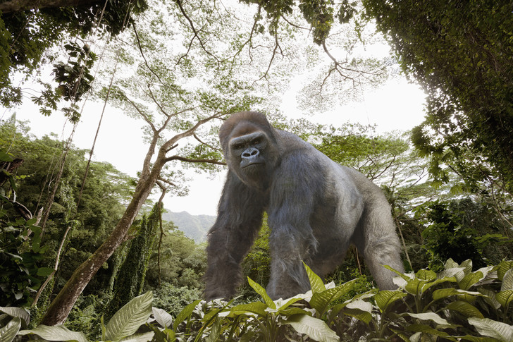 Фото №1 - Подсчитан ущерб от охоты на тропических животных