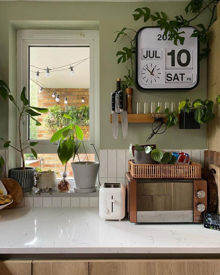 Фото №1 - Как вырастить авокадо у себя дома: практические советы