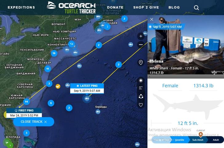 Фото №2 - Сайт дня: следи за морскими обитателями в режиме реального времени