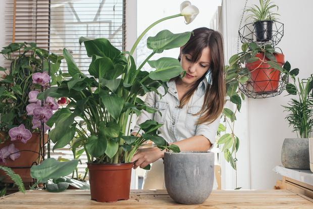 Фото №1 - Почему нельзя дарить саженцы и цветы в горшках
