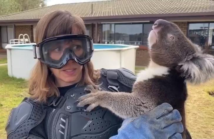 Фото №1 - Журналистка повелась на розыгрыш и надела бронежилет, чтобы взять на ручки коалу (видео)