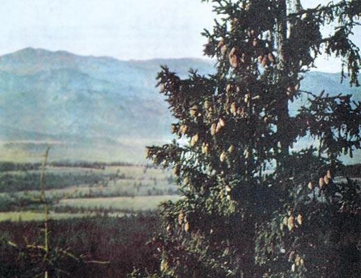 Фото №1 - Татранские золотоискатели