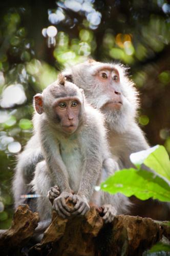 Фото №1 - Звериная страсть: на каких животных похожи звездные пары