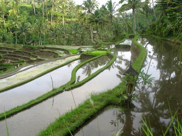 Фото №2 - Религия священных вод острова Бали