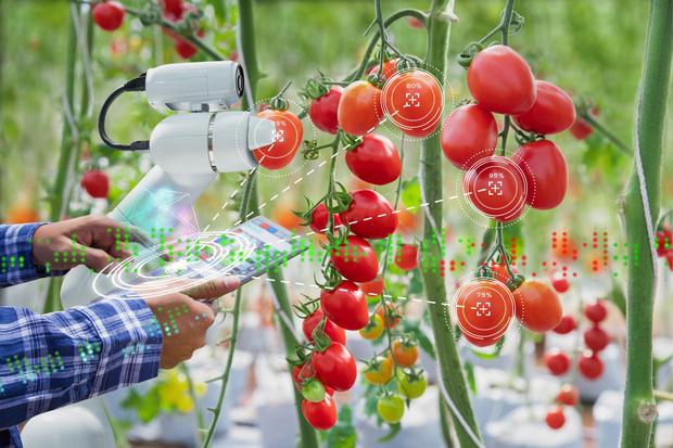 Фото №12 - Новый робот борозды не испортит. Об успехах сельского хозяйства XXI века