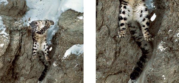Фото №4 - Кошки высокого полета