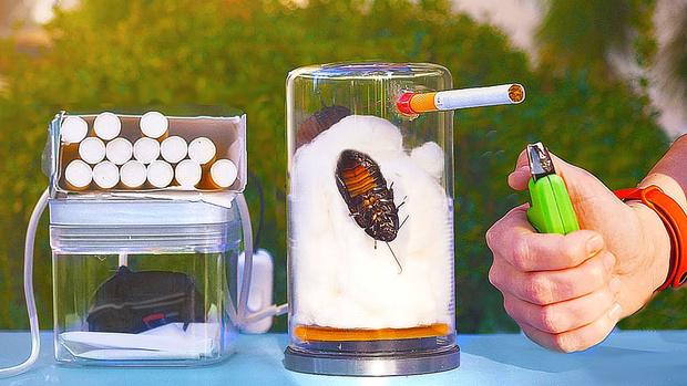 Фото №1 - Что будет, если таракан выкурит 20 сигарет? Эксперимент совсем не с тем финалом, что ты ожидал (видео)