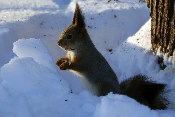 Фото №2 - По миру снежной теплоты