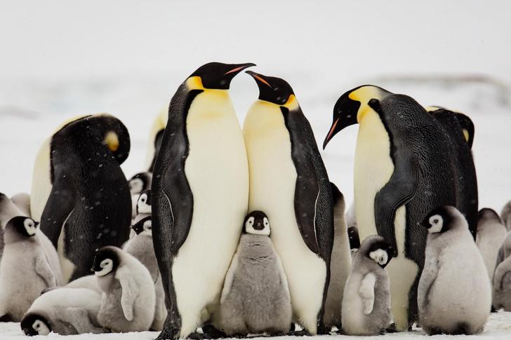 Фото №1 - Семейное тепло
