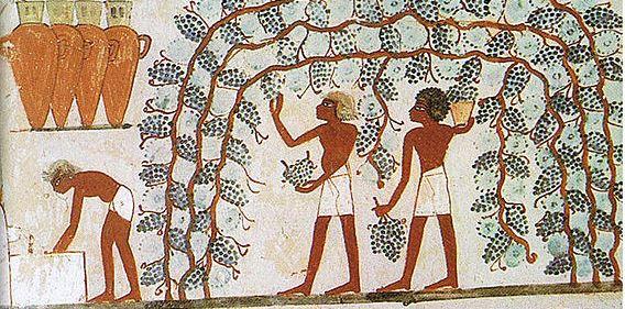 Фото №1 - Расшифрован древнеегипетский рецепт от похмелья, датируемый II веком