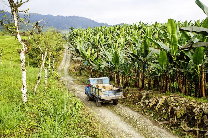Фото №4 - Рабочий момент: банановый рай