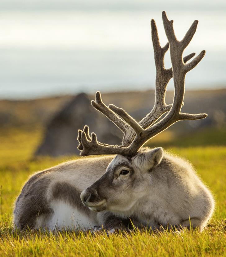Фото №6 - Зима, холода: какими способами выживают обитатели полярных широт
