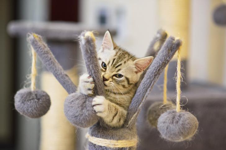 как отучить кота драть обои и мебель