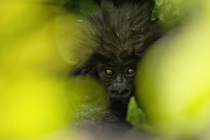 Фото №1 - Один кадр: Руанда