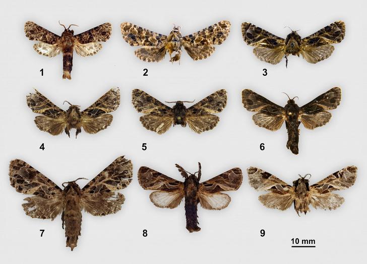 Фото №1 - Новые виды бабочек назвали в честь русских писателей и художников