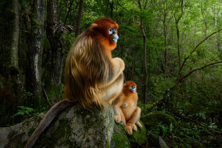 Фото №1 - Выбраны лучшие фотографии дикой природы