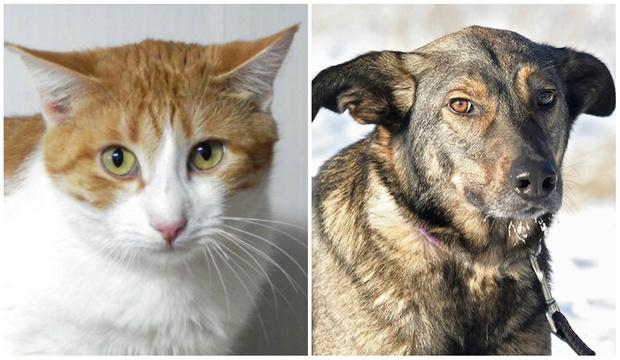 Фото №1 - Котопёс недели: кот Андерс и пес Веня ждут в приюте своих хозяев